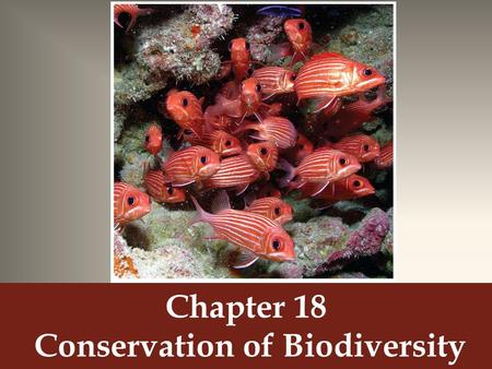 Chapter 18 Conservation of Biodiversity. Extinction is Forever Extinction (aka biological extinction) – A process in which an entire species ceases to.