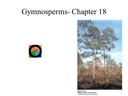 Gymnosperms- Chapter 18. Naked versus Enclosed Seed Plants Gymnosperms –Gymno- gr. naked. –Sperma- gr. seed. Angiosperms –Angeion- gr. vessel. –Sperma-