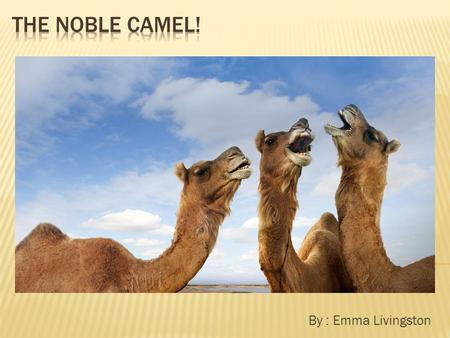 By : Emma Livingston.  The camel fits in the mammal group.  Their scientific name is Camelus Dromedarius.  The camel's lifespan is to 12-15 years.