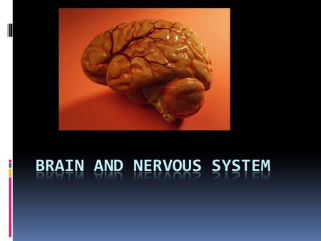 "You will learn  The main sections of the brain, where they are and their functions  The brain can change it ""rewires"" itself  Healthy habits for the."
