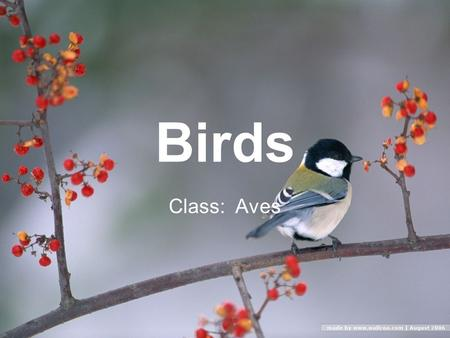 Birds Class: Aves. Information on Birds About 10,000 species of birds Smallest is a 5 cm bee hummingbird Largest is a 2.7 m ostrich Come in all colors.