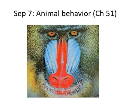 Sep 7: Animal behavior (Ch 51). Dispatch 9/7 1) What is the difference between NPP and GPP? 2) How are cellular respiration and photosynthesis similar?