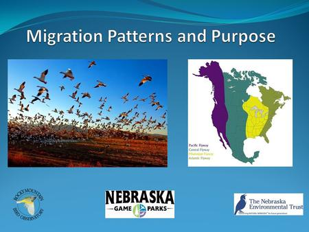 Why Migrate? Food availability Weather Mating So where to? Many birds follow migration corridors called flyways Following important habitat features;