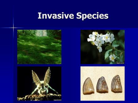 Invasive Species. Review Native Species - A species which has evolved to adapt to specific conditions in a particular region Native Species - A species.