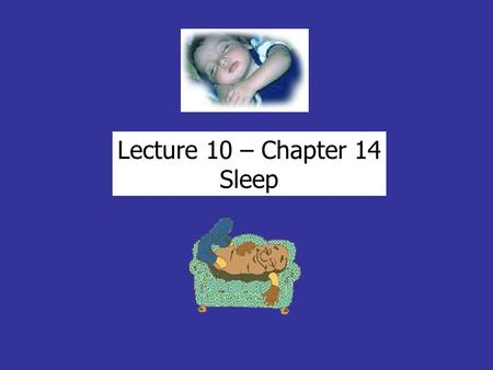 Lecture 10 – Chapter 14 Sleep. SLEEP Circadian Humans spend 1/3 of life sleeping (well over 175,000 hrs) typically 8 hours/day… so - 3/day = extra 21.