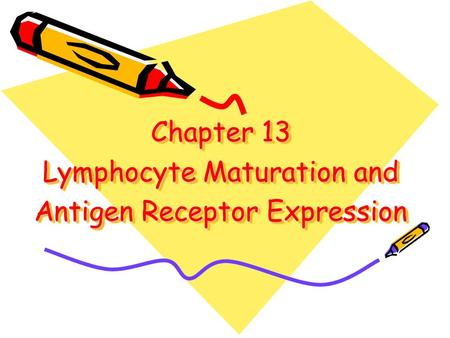 Chapter 13 Lymphocyte Maturation and Antigen Receptor Expression.