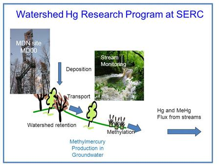 Methylmercury Production in Groundwater Watershed Hg Research Program at SERC Deposition Transport Watershed retention Methylation MDN site MD00 Stream.