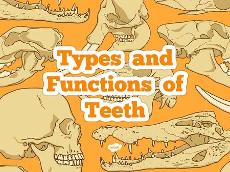 I can identify the types and functions of teeth.