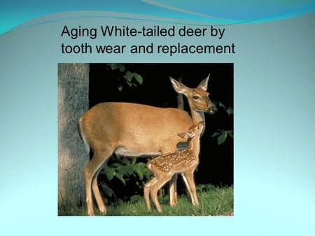 Aging White-tailed deer by tooth wear and replacement.
