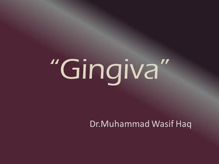 """Gingiva"" Dr.Muhammad Wasif Haq. What is Oral Mucosa? Mucous membrane epithelium of oral cavity. Divided into three types on basis of ""Function"": -Masticatory."
