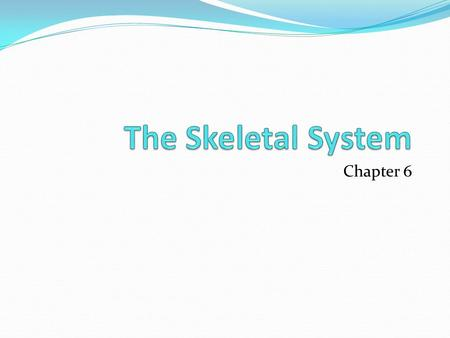 The Skeletal System Chapter 6.