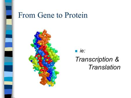 From Gene to Protein n ie: Transcription & Translation.