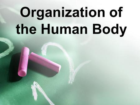 Organization of the Human Body. Let's do a quick activity!  SHxl9dhM8shttp://www.youtube.com/watch?v=q SHxl9dhM8s.