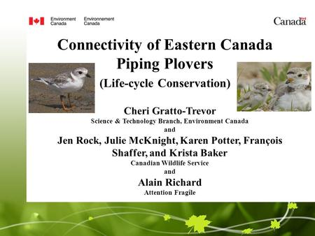 Connectivity of Eastern Canada Piping Plovers (Life-cycle Conservation) Cheri Gratto-Trevor Science & Technology Branch, Environment Canada and Jen Rock,