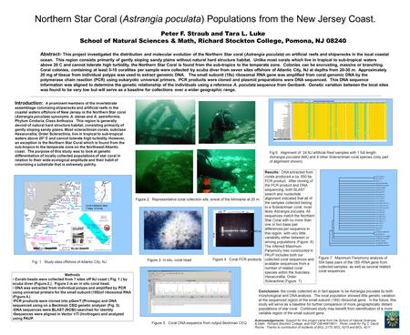 Northern Star Coral (Astrangia poculata) Populations from the New Jersey Coast. Abstract- This project investigated the distribution and molecular evolution.