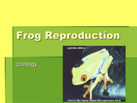Frog Reproduction zoology. Objectives  Explain how male frogs attracts females of the same species.  Discuss the reproductive system of a frog.  Describe.