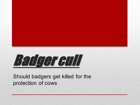 Badger cull Should badgers get killed for the protection of cows.