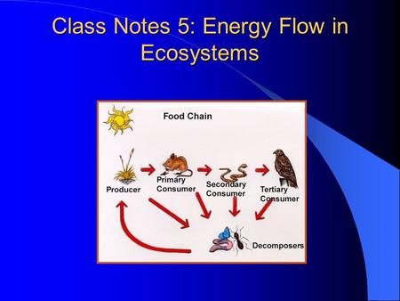 Class Notes 5: Energy Flow in Ecosystems I. Energy Flow A. Ecologists trace the flow of energy through communities to discover nutritional relationships.