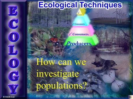 © SSER Ltd. How can we investigate populations?. Ecological Techniques A variety of universal practical approaches exist for investigating the biotic.