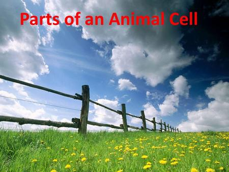 Parts of an Animal Cell Powerhouse of the Cell Transfers Energy from compounds to ATP Cellular Respiration takes place here.