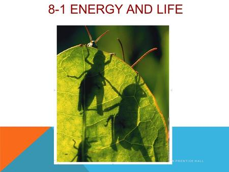 8-1 ENERGY AND LIFE COPYRIGHT PEARSON PRENTICE HALL.