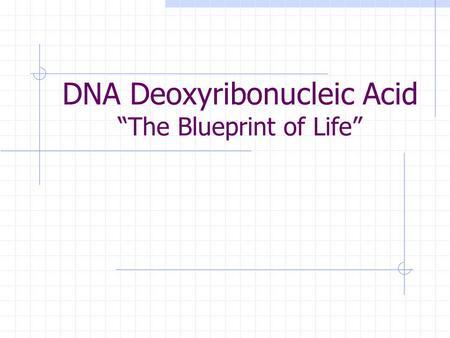 Dna deoxyribonucleic acid the blueprint of life ppt download dna deoxyribonucleic acid the blueprint of life malvernweather Images