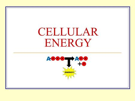 CELLULAR ENERGY All Cells Need Energy Cells need energy to do a variety of work: Making new molecules. Building membranes and organelles. Moving molecules.