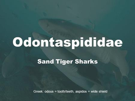 Odontaspididae Sand Tiger Sharks Greek: odous = tooth/teeth, aspidos = wide shield.