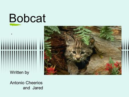 Bobcat. Written by Antonio Cheerios and Jared. protection  It has big sharp teeth to protect themselves from predators.  In the winter it covers itself.