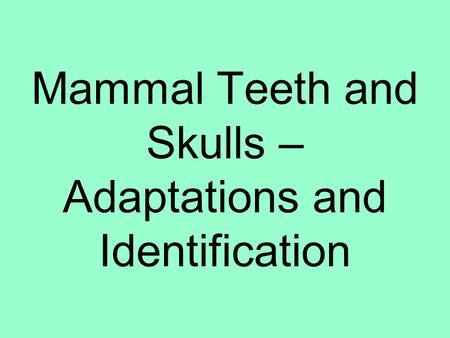 Mammal Teeth and Skulls – Adaptations and Identification.