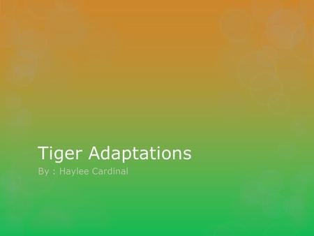 Tiger Adaptations By : Haylee Cardinal. The Striped Coat The tigers striped coat helps them blend in well with the sunlight filtering through the tree.