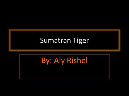 By: Aly Rishel Sumatran Tiger. Size Smallest Tiger of their kind. Males weigh up to 300 lbs Up to 8 ft. Long.