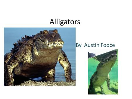 Alligators By Austin Fooce. Animal Defenses The alligator has front and back claws. He can use it's sharp teeth to help it survive and with claws. It.