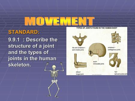 STANDARD: 9.9.1 : Describe the structure of a joint and the types of joints in the human skeleton.