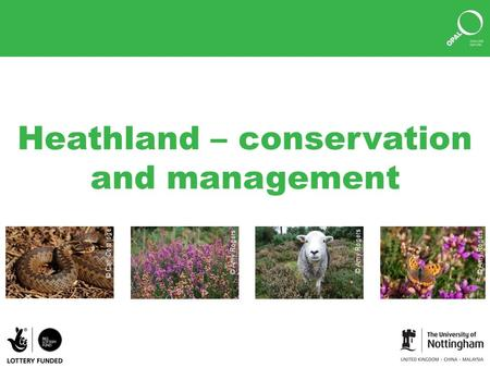 Heathland – conservation and management © Amy Rogers © Carl Corbidge.