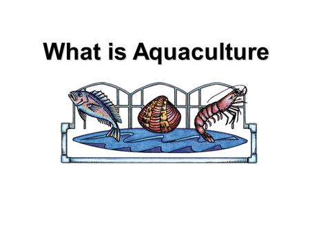 What is Aquaculture. Photograph by HBOI Mariculture The husbandry marine organisms Photograph by HBOI.