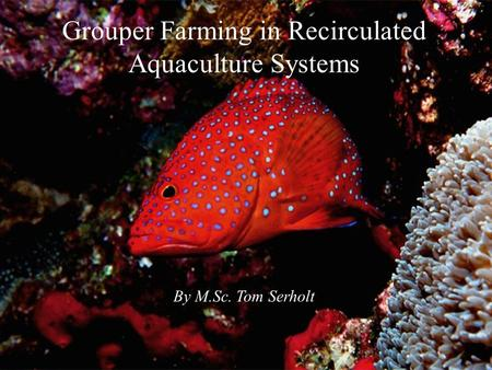 Grouper Farming in Recirculated Aquaculture Systems