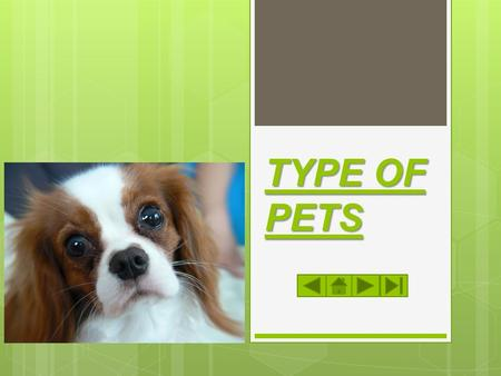 TYPE OF PETS WELCOME! This is a module to teach you all about the different types of pets. This knowledge may help you decide which type of pet to get.