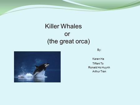 Killer Whales or (the great orca) By: Karen Ha Tiffani To Ronald Ho Huynh Arthur Tran.