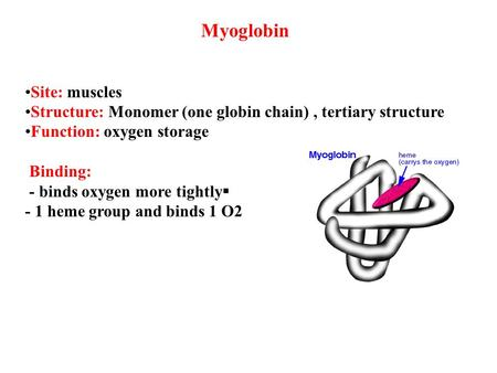 Myoglobin •Site: muscles