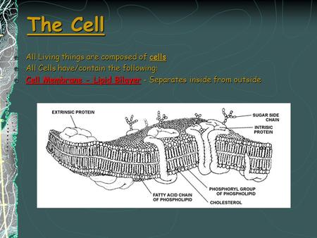 The Cell All Living things are composed of cells All Cells have/contain the following: Cell Membrane - Lipid Bilayer - Separates inside from outside.