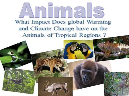 The animals of the Tropical Region are slowly going to die out and eventually become extinct. But as the earth adapts to it's new current state, so do.