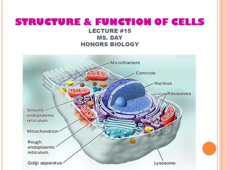 STRUCTURE & FUNCTION OF CELLS LECTURE #15 MS. DAY HONORS BIOLOGY.