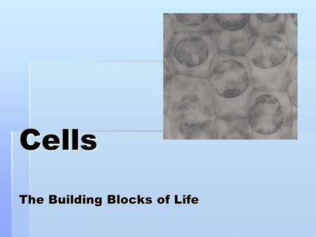 Cells The Building Blocks of Life Endoplasmic reticulum Cytoplasm Nucleus and Nucleolus Mitochondria Lysosome Golgi complex Cell membrane Ribosome.