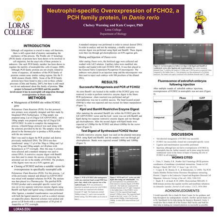Neutrophil-specific Overexpression of FCHO2, a PCH family protein, in Danio rerio Chelsey Warning and Kate Cooper, PhD Loras College Department of Biology.