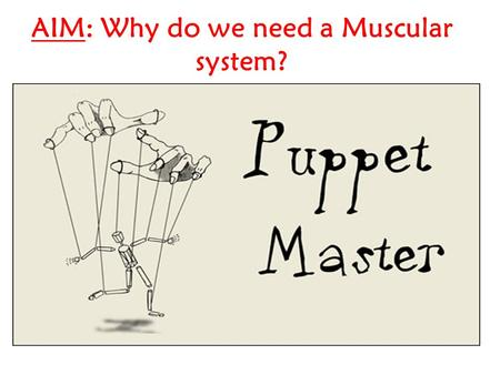 AIM: Why do we need a Muscular system?. DO NOW: Explain how puppets work HW: Identify the 3 types of muscle and provide examples of each.
