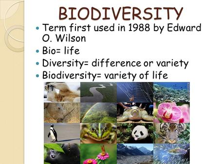 BIODIVERSITY Term first used in 1988 by Edward O. Wilson Bio= life Diversity= difference or variety Biodiversity= variety of life.