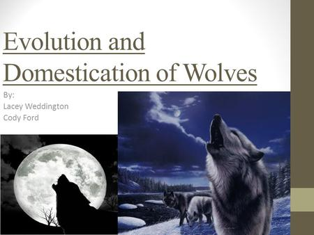 Evolution and Domestication of Wolves By: Lacey Weddington Cody Ford.