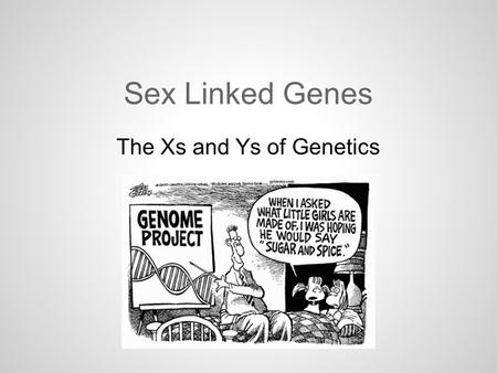 Sex Linked Genes The Xs and Ys of Genetics. Sex Linked Genes There are 23 pairs of chromosomes and one of those pairs are the sex chromosomes. There are.