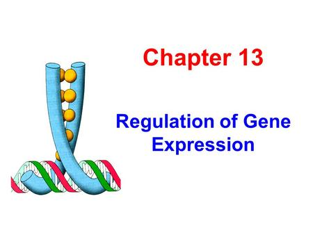 Chapter 13 Regulation of Gene Expression. Section 1 Principles and Concepts.